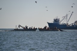 Pêche dans la Baie de Chesapeake