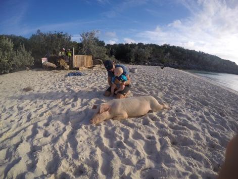 Plage aux cochons (Staniel Cay)