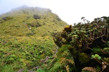 Excursion sur le mont Pelée