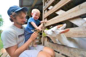 Charles apprivoise les chèvres